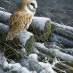 jeremy-paul-winter-owl