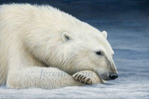 jeremy-paul-polar-bear