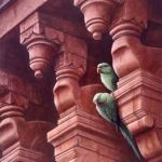 jeremy-paul-Rose-ringed parakeets