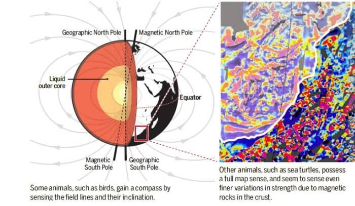 The Northern Lights, the Magnetic Field and Life – Many Worlds