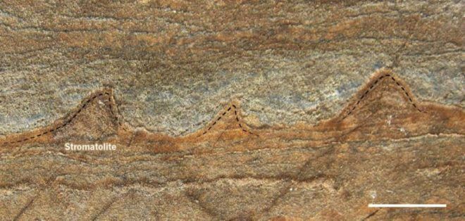 An image of a rock with fossilized stromatolites, tiny layered structures from 3.7 billion years ago that are remnants from a community of microbes. Found in a newly melted part of Greenland, Australian scientists reported in the journal Nature that the stromatolites lived on an ancient seafloor at a time when Earth's skies were orange and its oceans green. They describe the stromatolites as perhaps the oldest fossil found so far on Earth. (Allen Nutman/University of Wollongong)