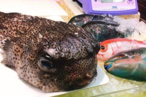 第一牧氏公設市場の鮮魚