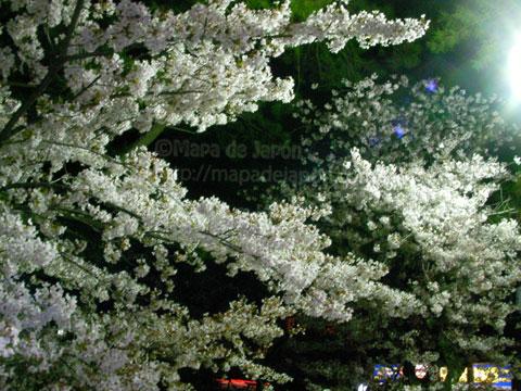 花見はサクラ(夜桜)