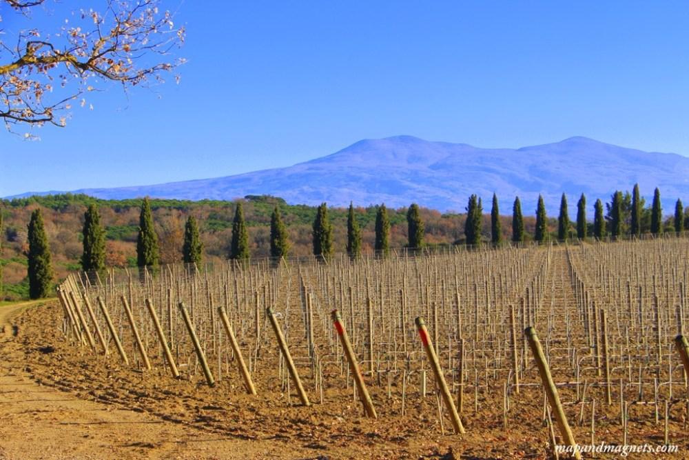 Tuscany vineyards winter