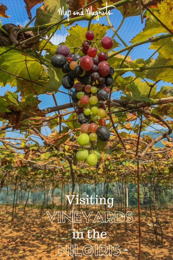 Visiting vineyards in the Nilgiris mountains, South India