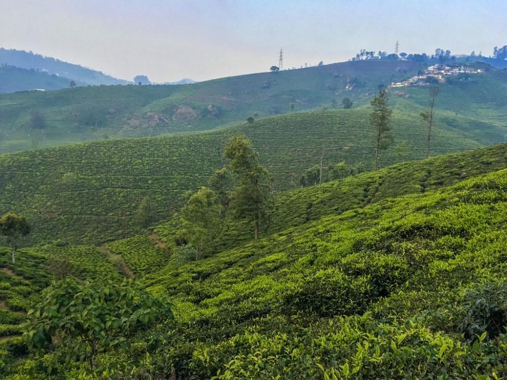 Tea plantations in Nilgiris