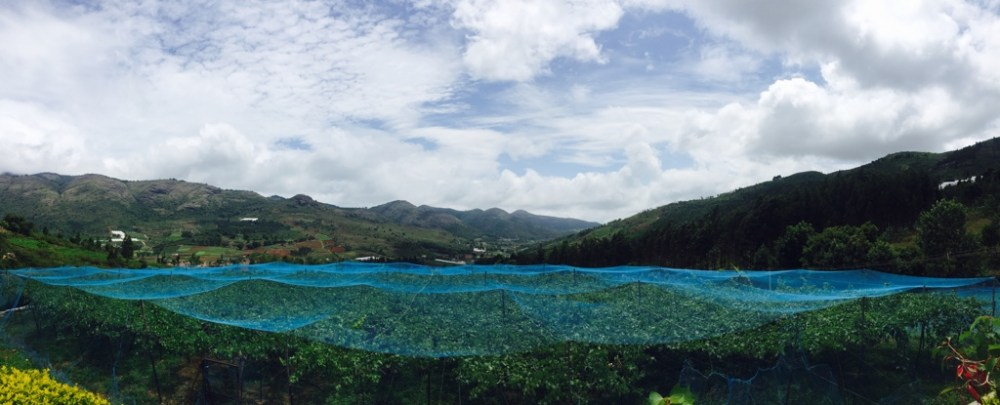 Panoramic views of the Nilgiris vineyards