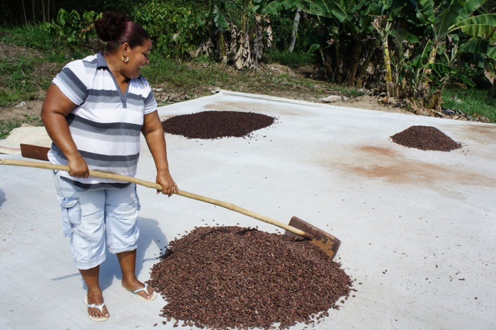 The turning process at a chocolate farm in Venezuela