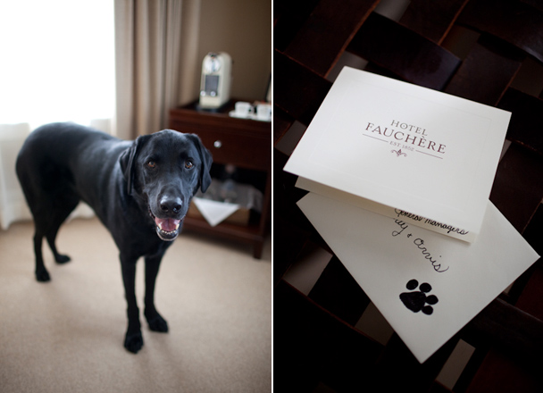 Pet Friendly Hotel Fauchere