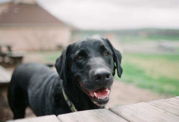 Dog Friendly Maple View Farm