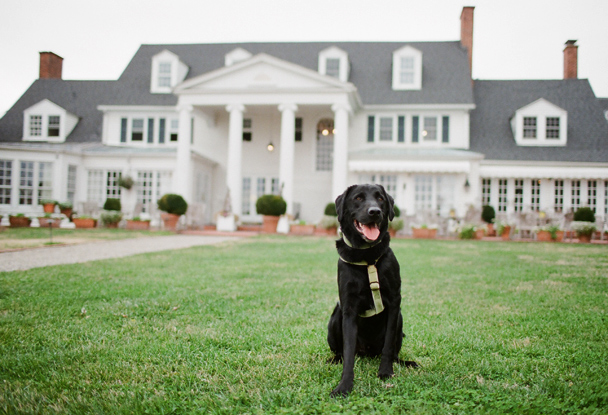 Dog Friendly St. Michaels Inn