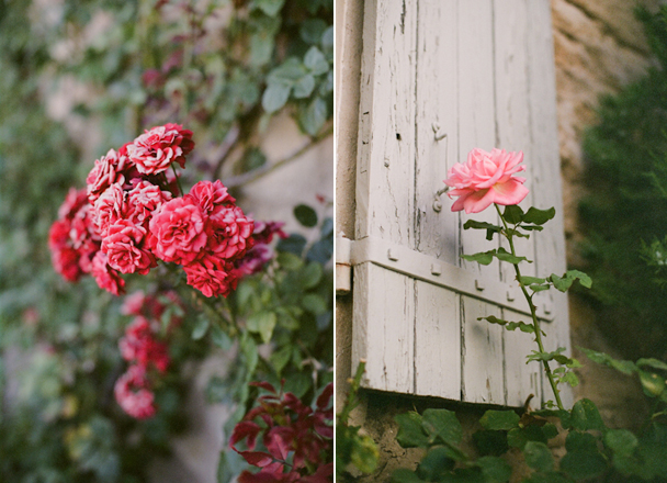 Provencal Roses