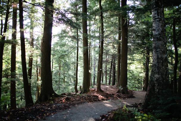 Stowe VT Trail