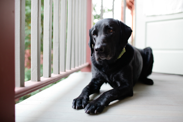 The Porches Inn Dog-Friendly