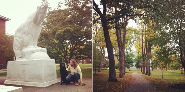 Fall at Bowdoin
