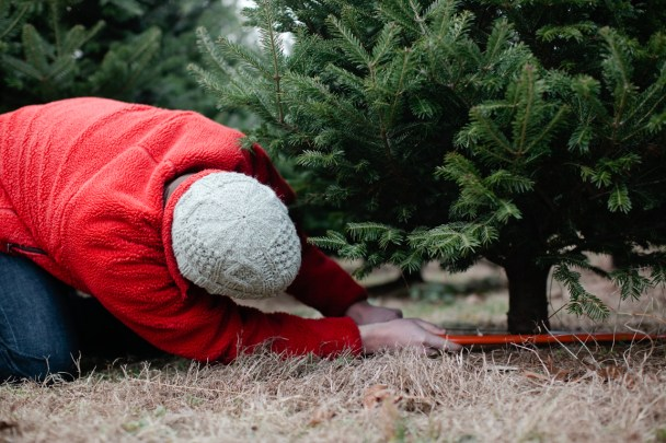 Cut Your Own Christmas Tree Maine