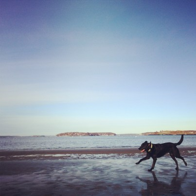 Fetch at Willard Beach