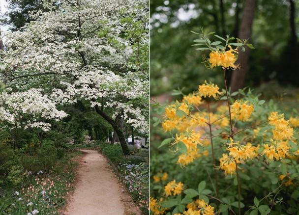 UNC Arboretum