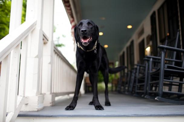 Hotel Fauchere Dog Friendly