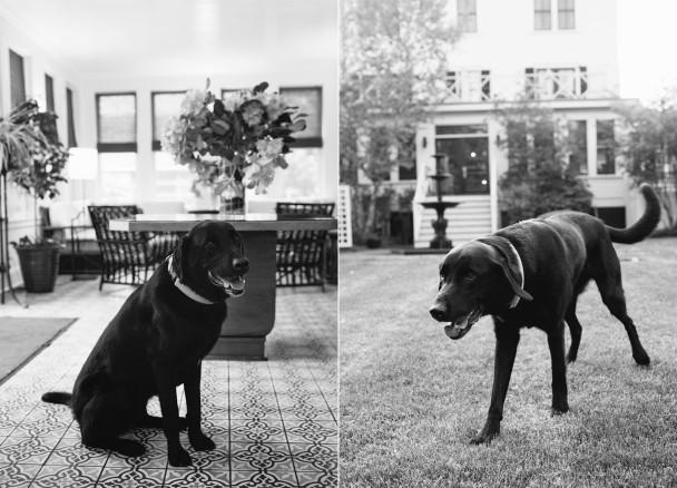 Hotel Fauchere Pets