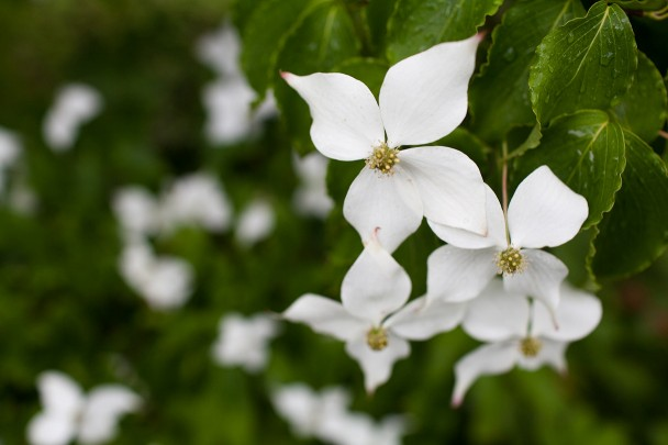 Dogwoods at Bedford Post Inn