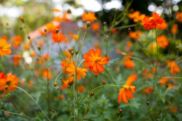 Flowers in Vermont