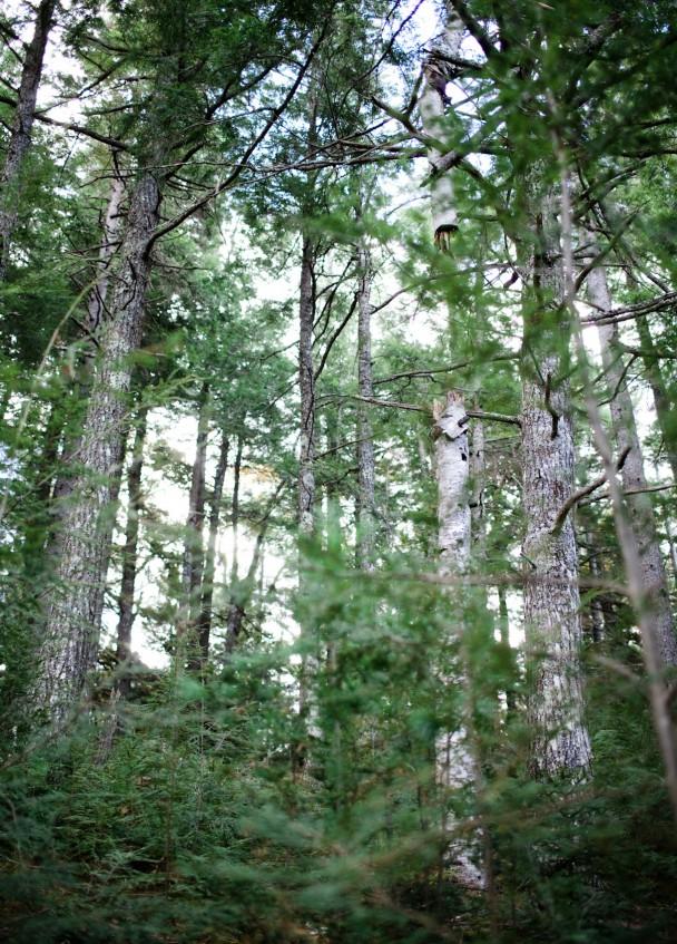 Sabattus Woods