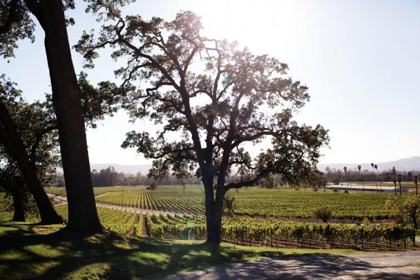 Scribe Winery Sonoma