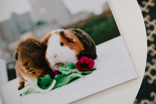 Rescue Pets of Boston Book Photos