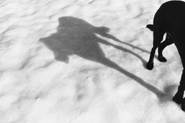 Orvis's Shadow