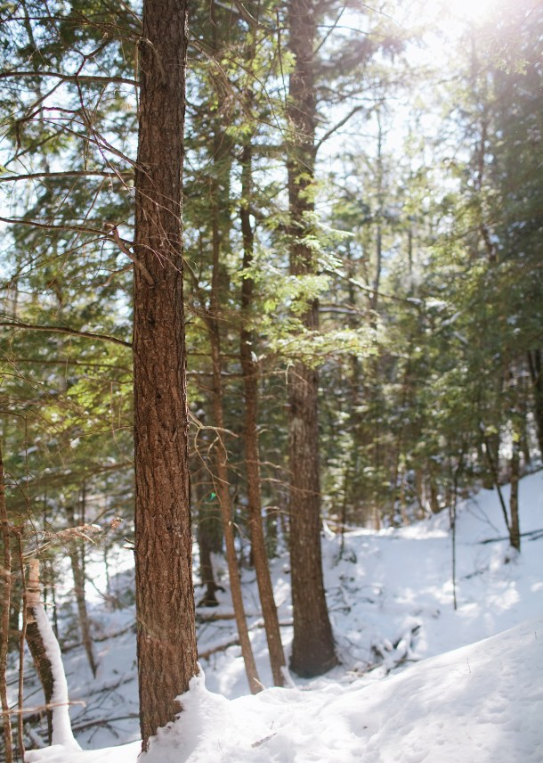 Trout Brook Preserve Alna Maine