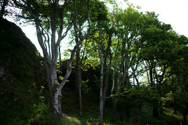 Oban-Coast-Scotland