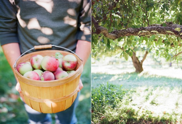 Apple Picking at Hansels Orchard North Yarmouth, Maine