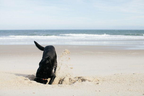 Dog-Friendly Bald Head Island NC Beach