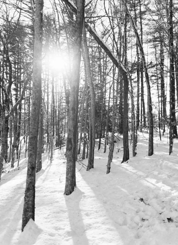 Wiscasset Woods