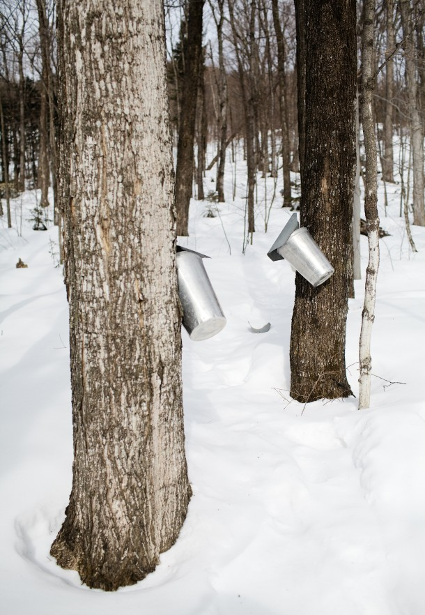 Vermont Maple Sugar Season
