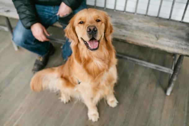 Maisy the Pitcher Inn Dog