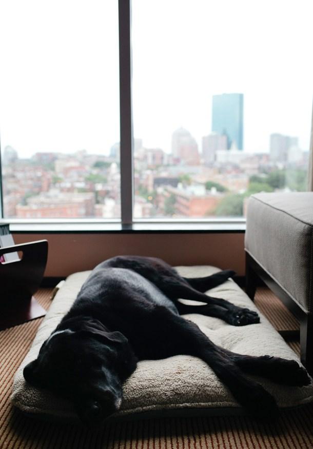The Liberty Hotel Dog Friendly