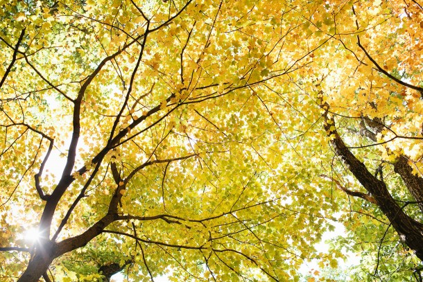 Fall in Nashville