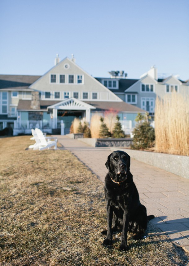 Dog Friendly Inn by the Sea