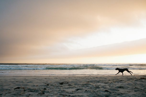 Carmel California Dog Beach