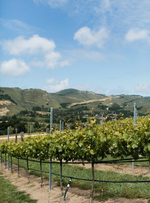 Carmel Valley Ranch Vineyards