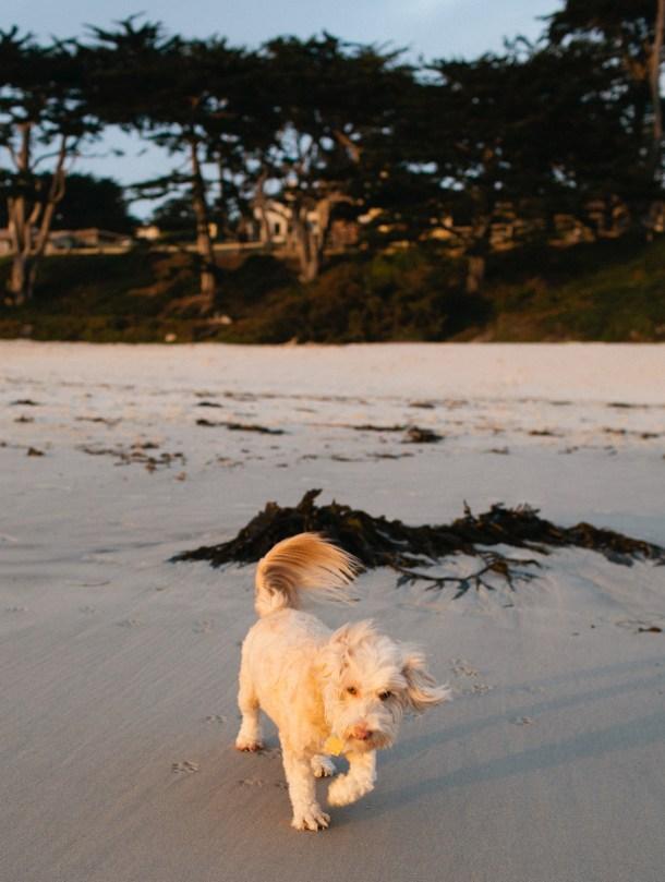 Dog Friendly Carmel California