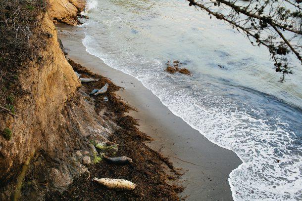 Point Lobos Carmel California