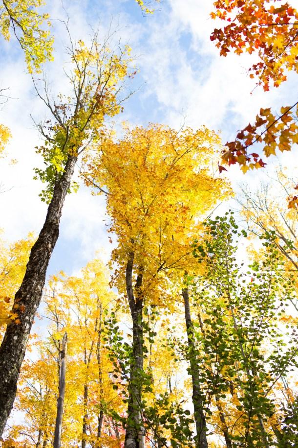 Fall Hike Bald Mountain Rangeley Maine