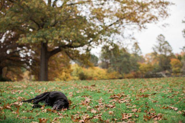 Maudslay State Park Dog Friendly