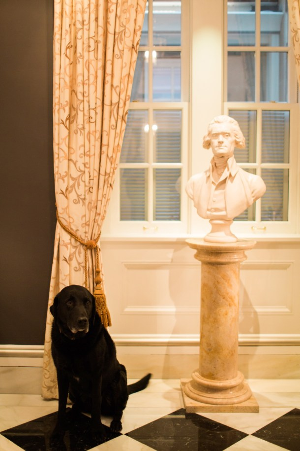 Dog Friendly Washington DC Hotels