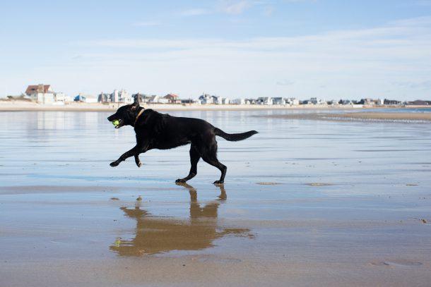 Dog Friendly Beach Maine