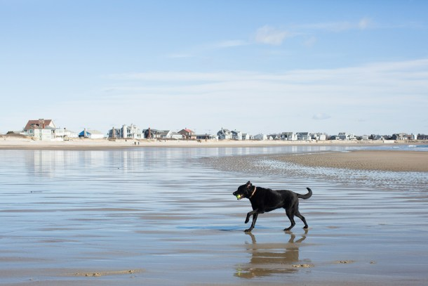 Dog Friendly Maine Beaches