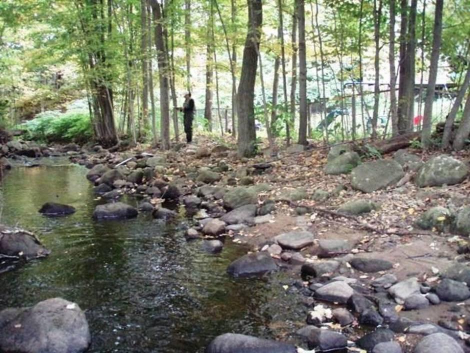 Beaver Brook Habitat
